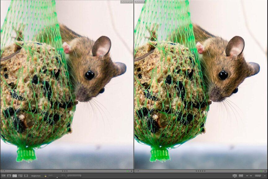 Vergleich Adobe Lightroom mit DxO PureRaw